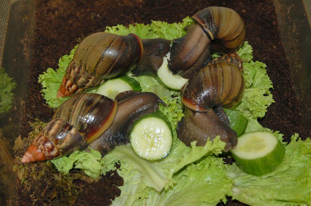 Und wenn ich es doch sage Herr Ober; Hier sind Schnecken im Salat !!!!