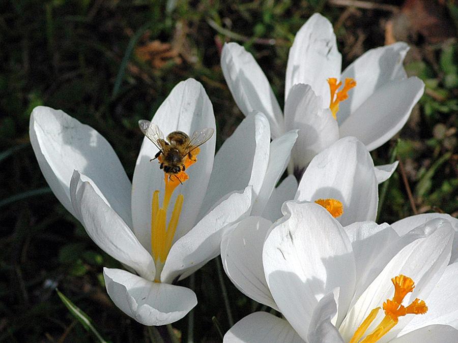 Und wie ists auf der weißen Blüte?