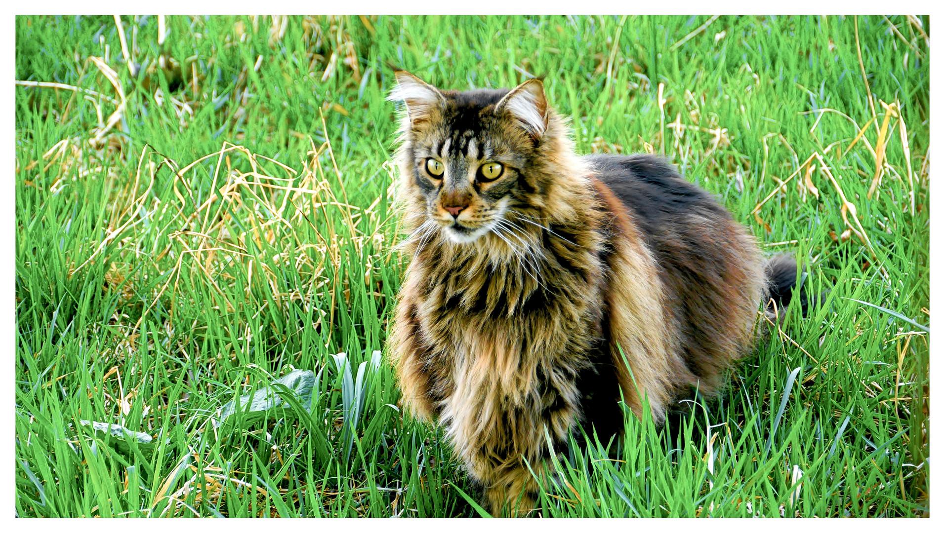 Und Wie Sehe Ich Aus Foto Bild Tiere Haustiere Katzen