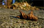 Und wieder wird es Herbst