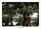 ...und wir liebten uns im Schatten des alten Baumes