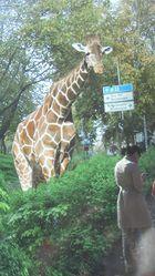 ...und wo geht´s bitt schön zum Zoo...
