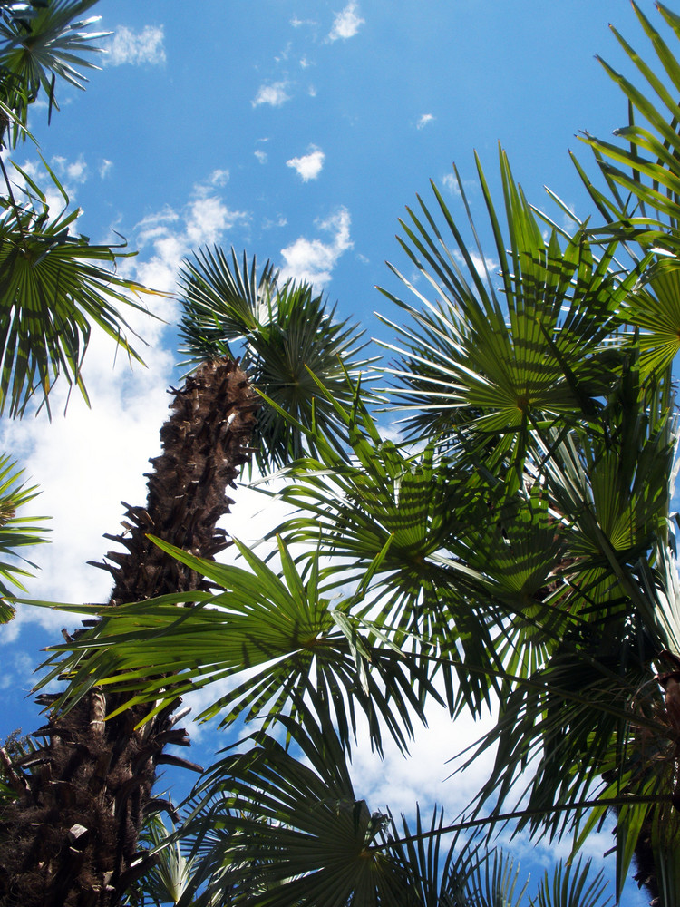 under the palmtrees