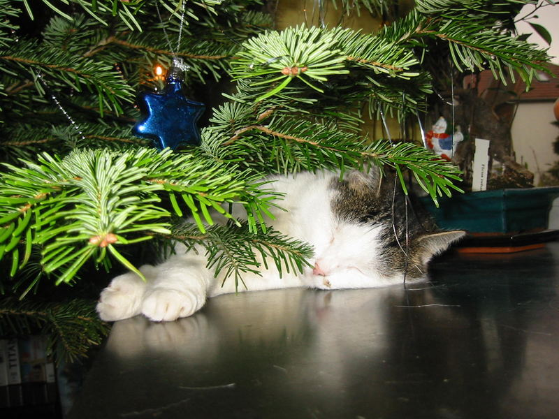 Underneath my Christmas tree....