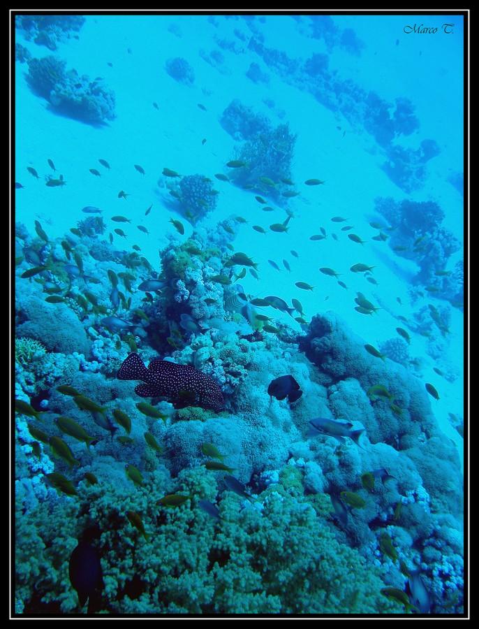 Underwater #3