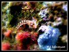 Underwater by Emily :*