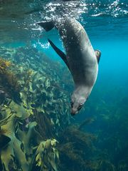 Underwater Dating... zur Abkühlung