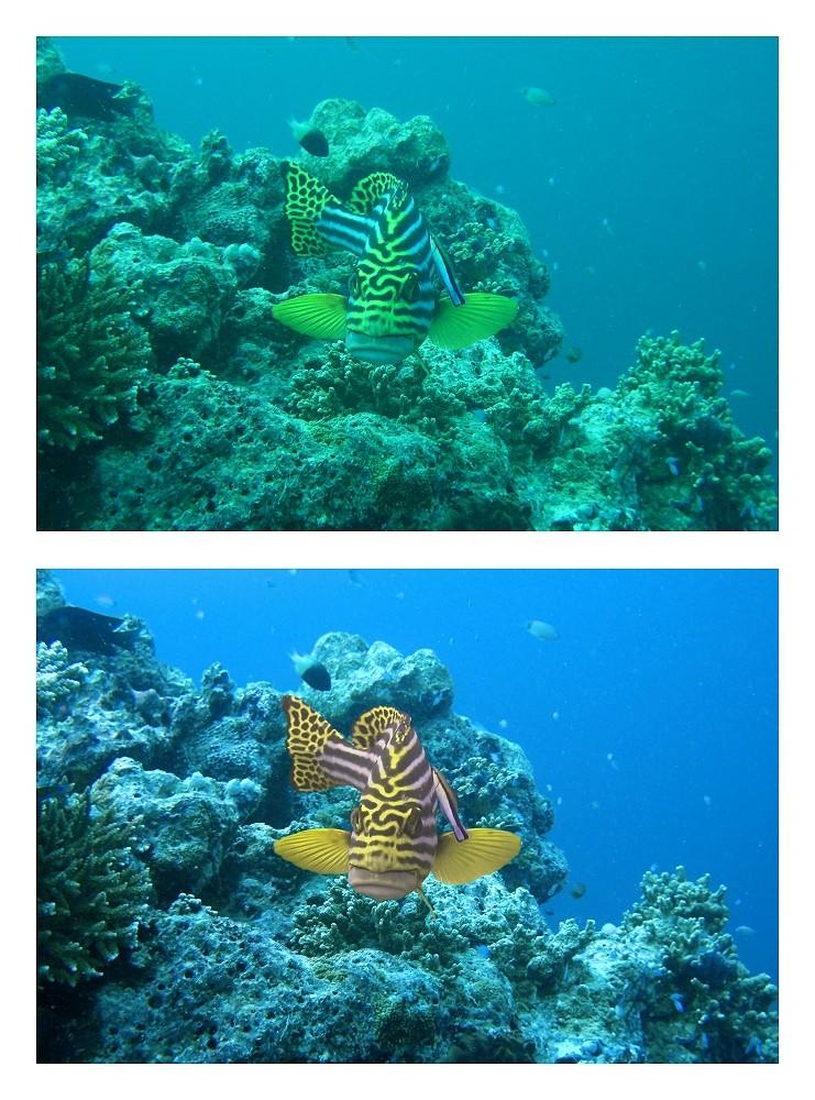 Underwaterworld - ein Versuchsbild