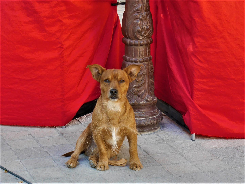 Une belle rencontre à Lamalou-les-Bains: c'est la star mais pas sur le tapis rouge