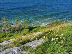 Une falaise de flysch de la Corniche Basque au printemps