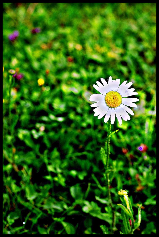 une fleur aux 1000 couleurs ,aux 1000 bonheurs!