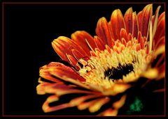 Une fleur avec de l'eau
