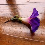Une fleur...