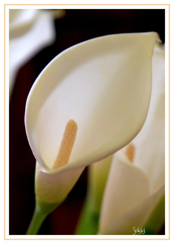 une fleur d' arôme