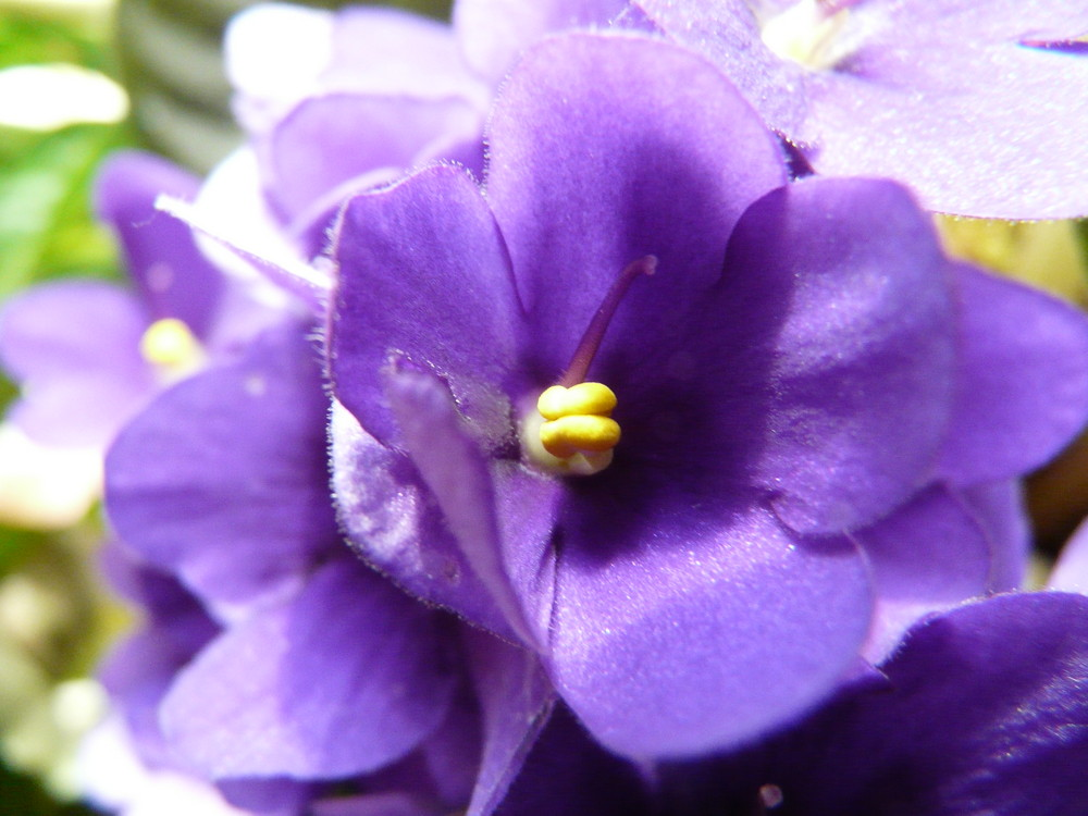 une fleur haute en couleur