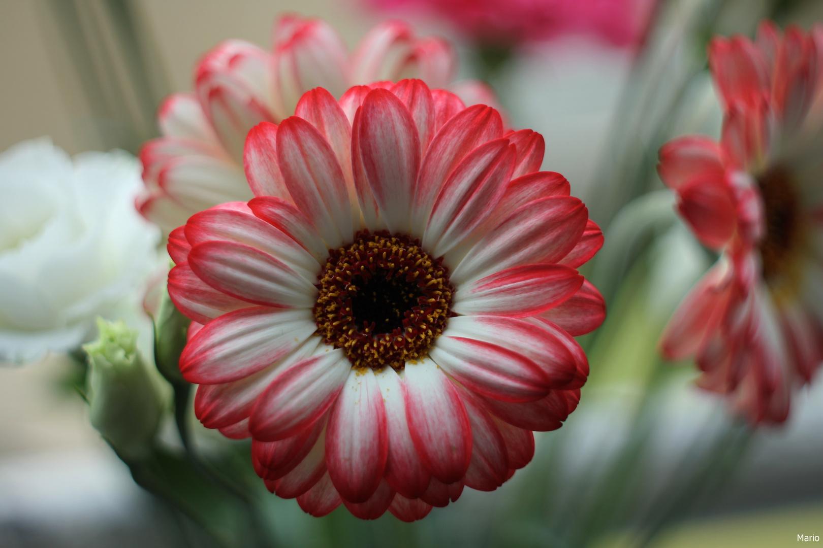 Une fleur pour mon Epouse