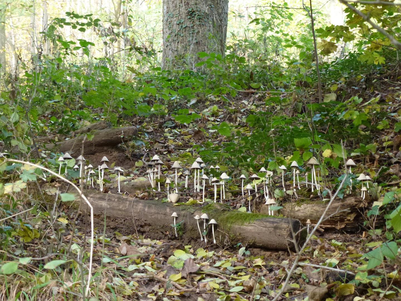 Une forêt de champignons !