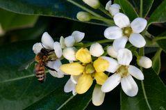 Une jolie petite abeille