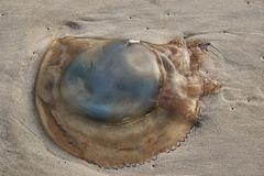 Une méduse !