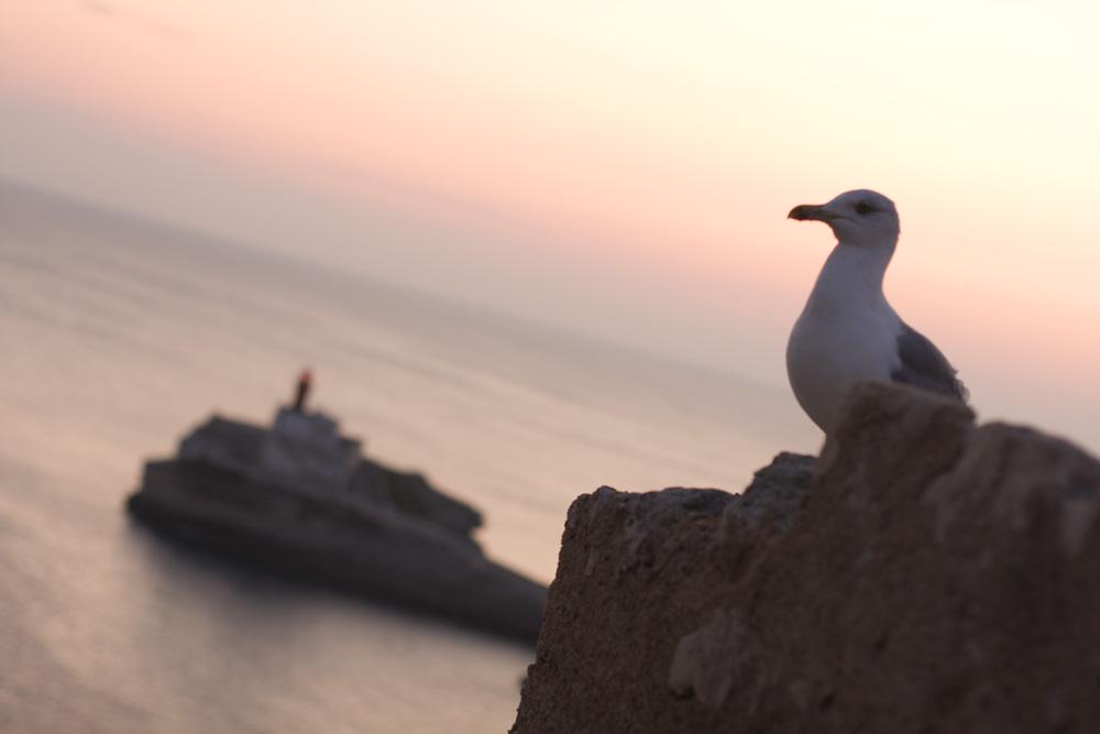 Une mouette au coucher de soleil