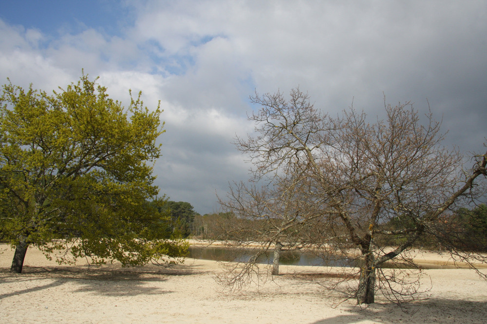Une oasis sur le bassin d'Arcachon
