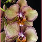 une orchidée pour votre week-end