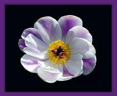 une petite fleur ...