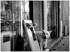 Une photo qui a du chien