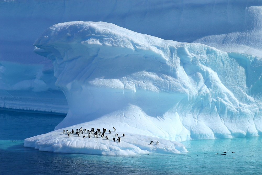 Une plage de rêve...Pôle Sud Iceberg et manchots