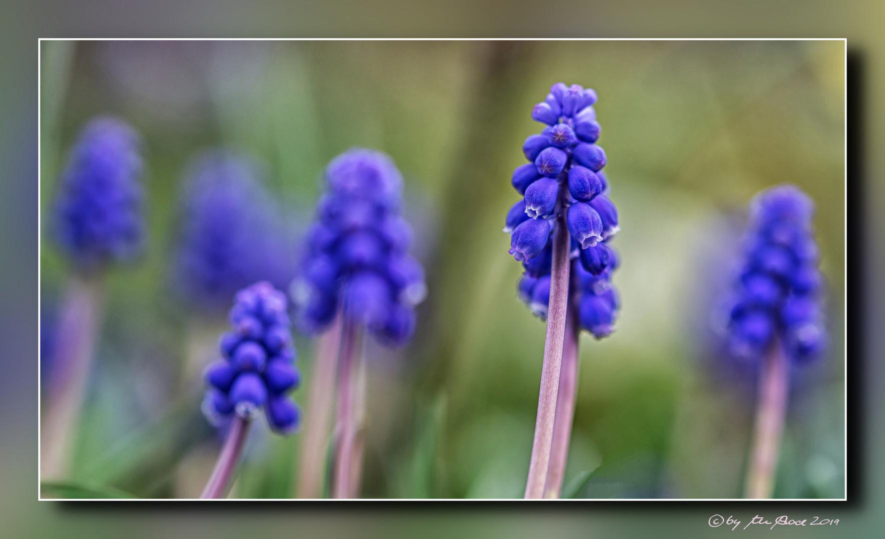Une poésie de printemps