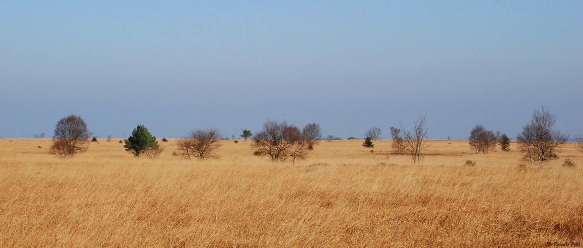 Une promenade dans la savane ?