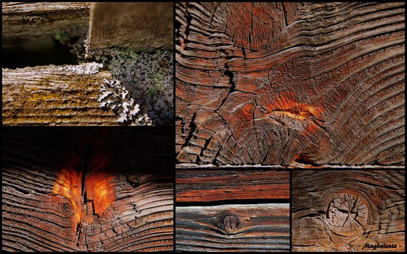 Une tranche de la vie du bois