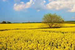 - unendlich gelb -