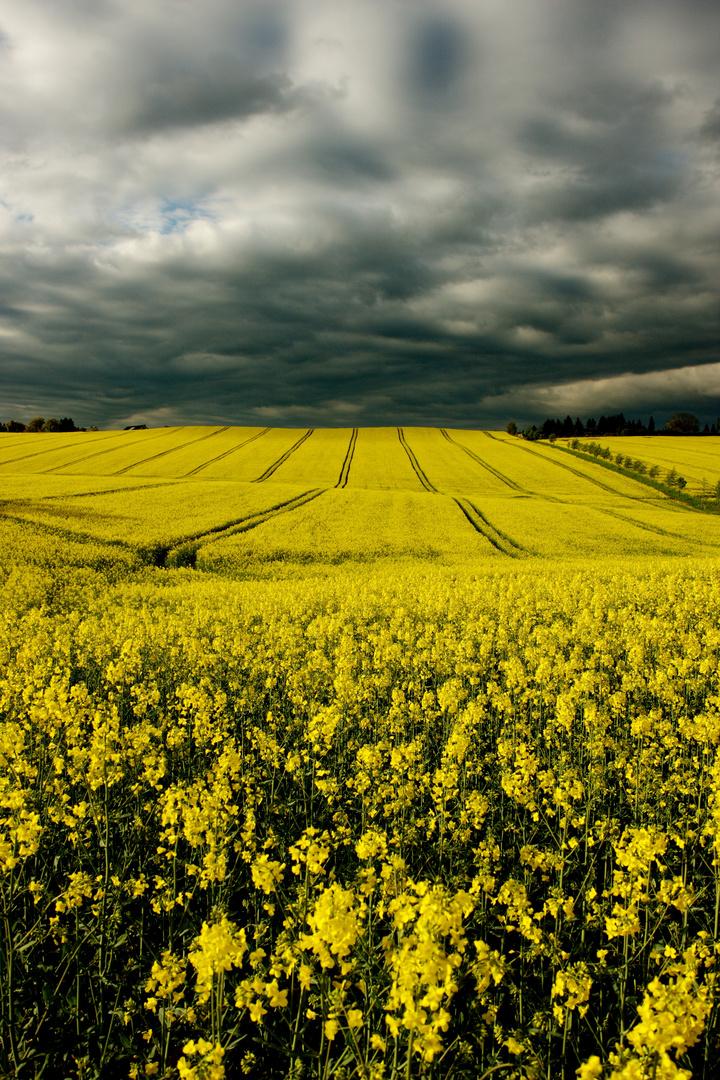 unendliche gelbe Weiten
