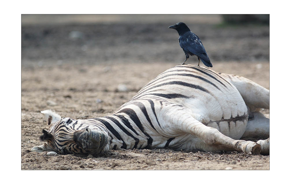 Ungewöhnliche Tierfreundschaft