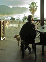 Ungewöhnlicher Besuch im Café  /  Visita insolita al bar  (5)