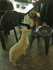 Ungewohnter Besuch im Café  /  Visita insolita al bar  (4)