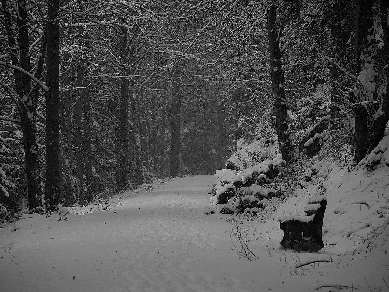 Unheimlicher Waldweg
