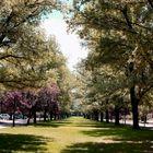 Uni Park