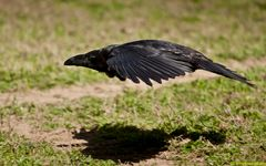 Unidentified Flying Object - U.F.O.