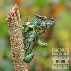 Unique Madagascar