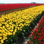UNITED COLORS OF FRIESLAND