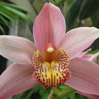Unknowen Flower