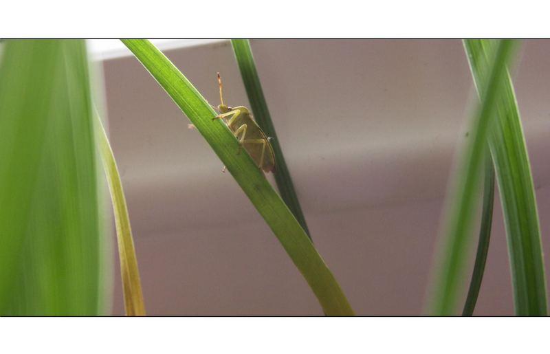 - unknown beetle 1 -