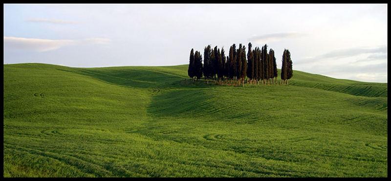 Uno, due, tre, ... tanti alberi