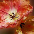 Unordentliche Tulpen