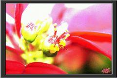 unscheinbare Blüte