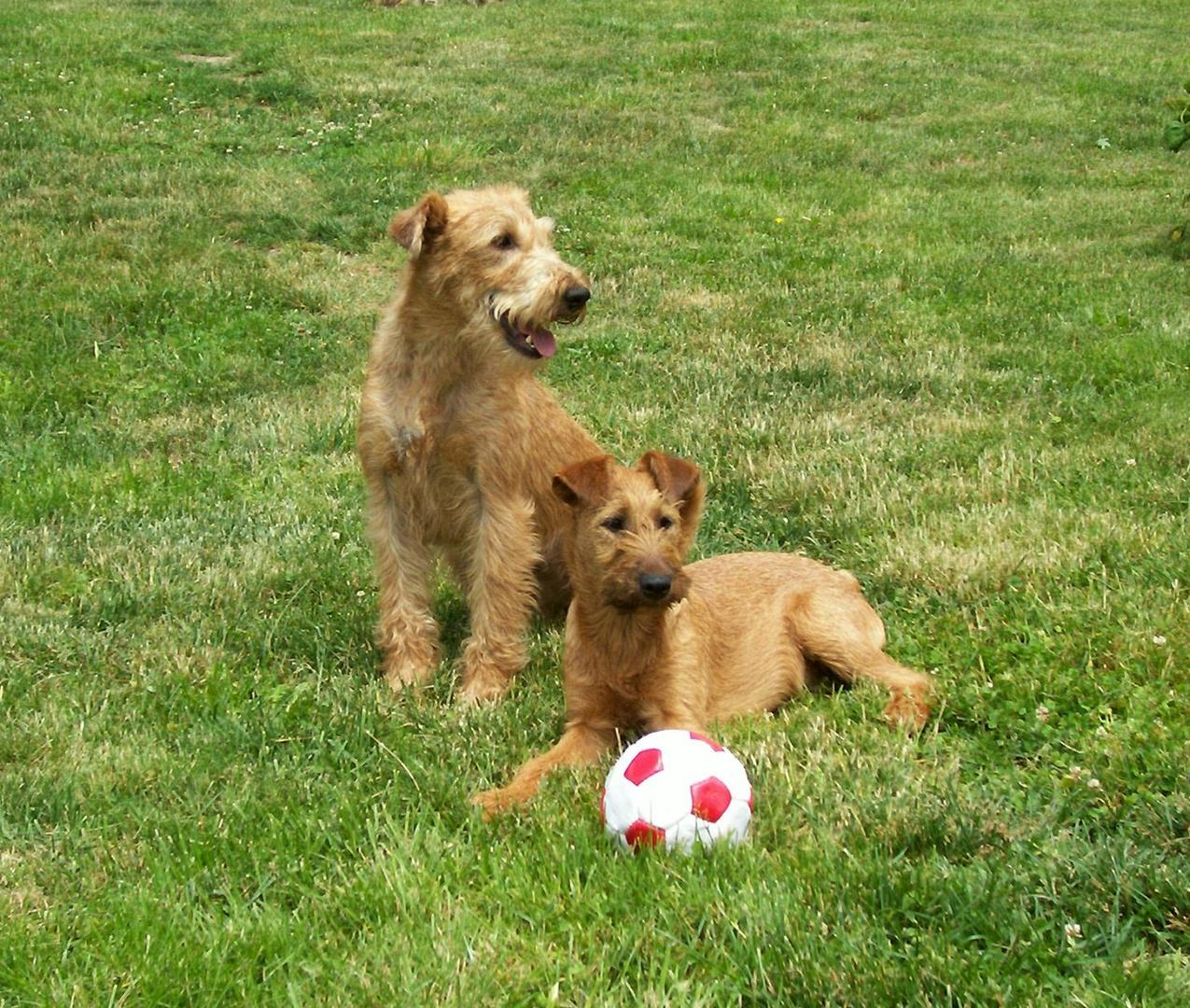 Unser Ball
