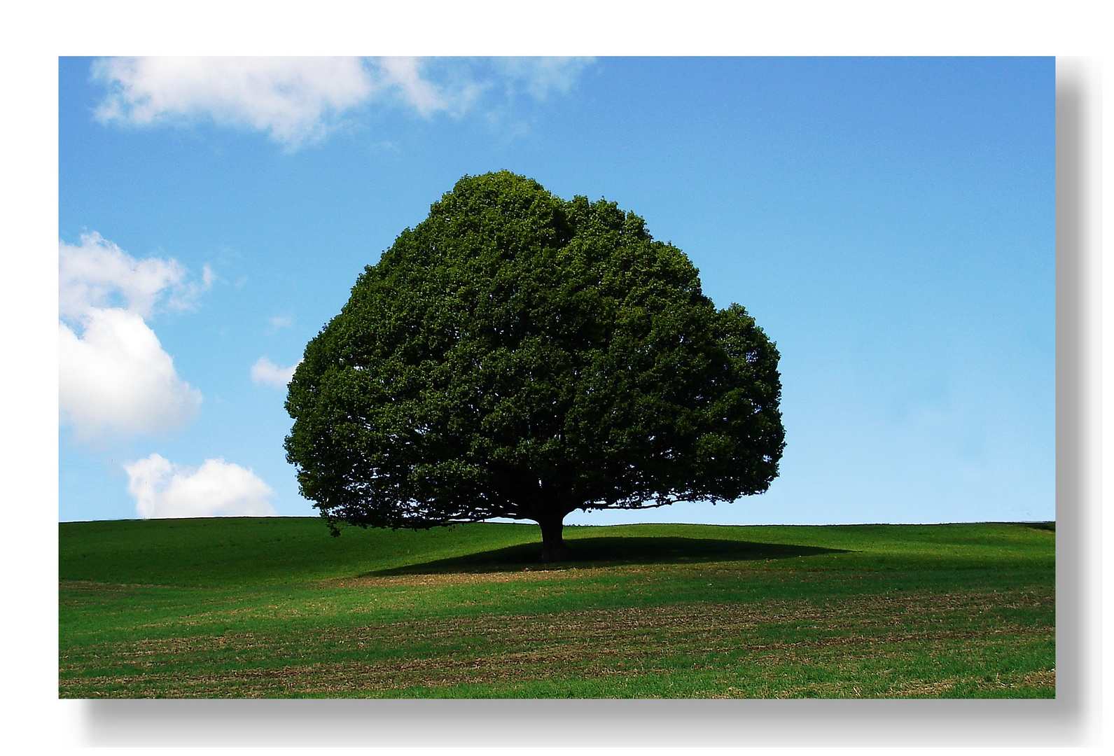 Unser Baum...