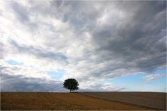 unser Baum....